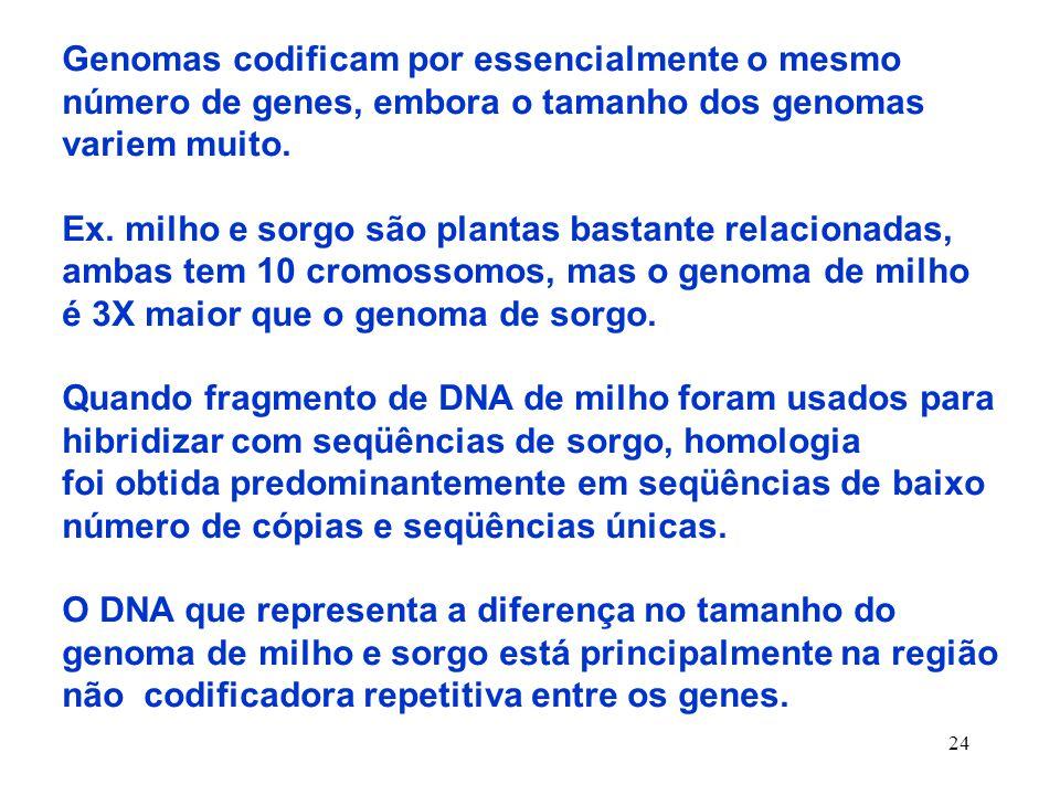 24 Genomas codificam por essencialmente o mesmo número de genes, embora o tamanho dos genomas variem muito.