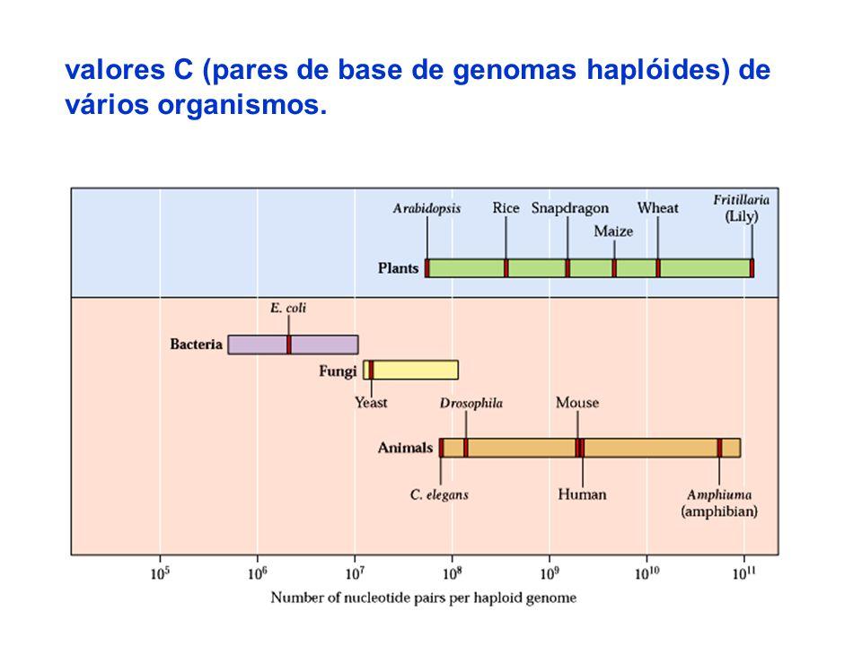 26 valores C (pares de base de genomas haplóides) de vários organismos.