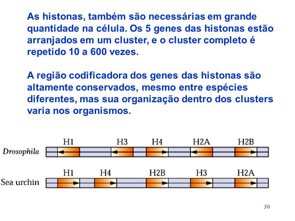 30 As histonas, também são necessárias em grande quantidade na célula.