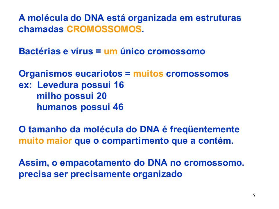 5 A molécula do DNA está organizada em estruturas chamadas CROMOSSOMOS.