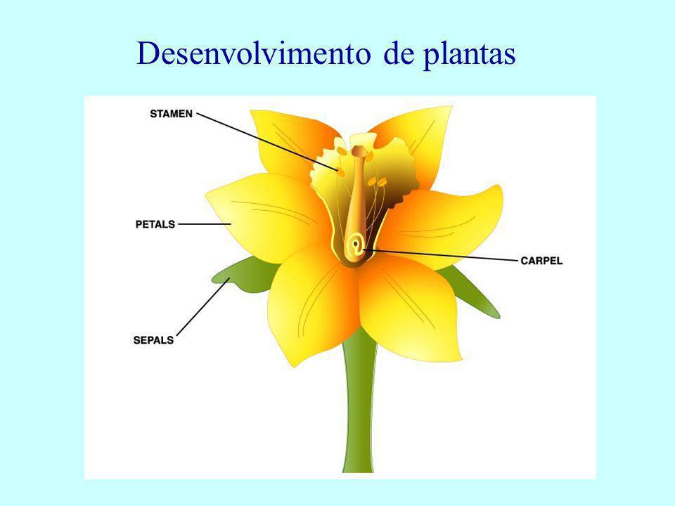 Desenvolvimento de plantas
