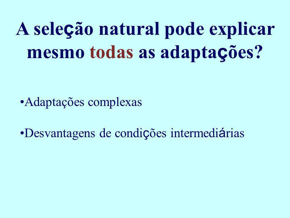 A sele ç ão natural pode explicar mesmo todas as adapta ç ões? Adaptações complexas Desvantagens de condi ç ões intermedi á rias