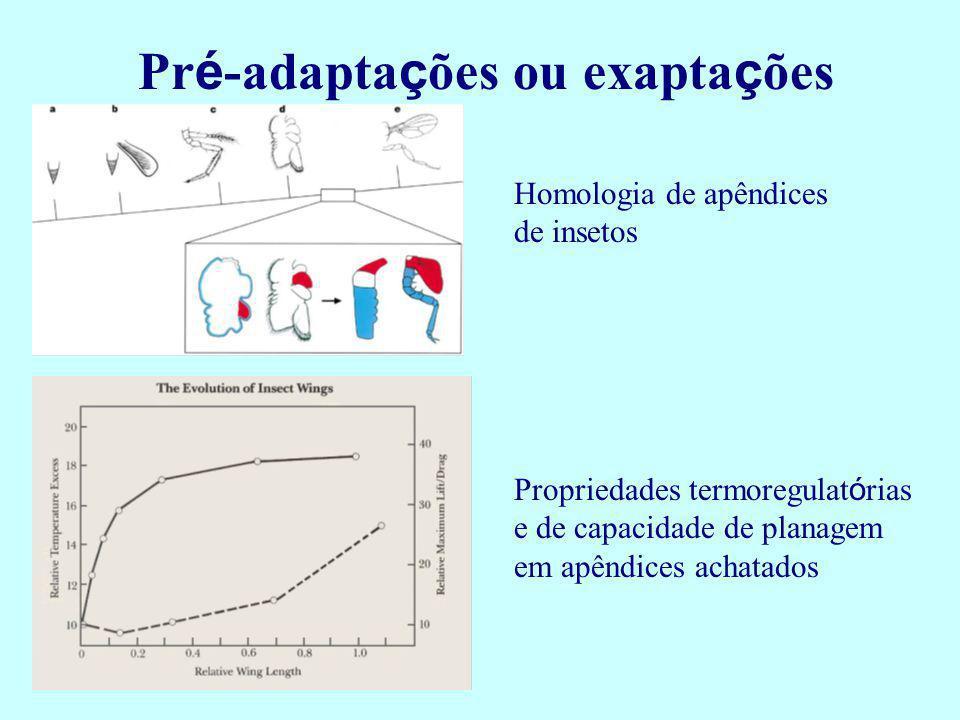 Pr é -adapta ç ões ou exapta ç ões Homologia de apêndices de insetos Propriedades termoregulat ó rias e de capacidade de planagem em apêndices achatad
