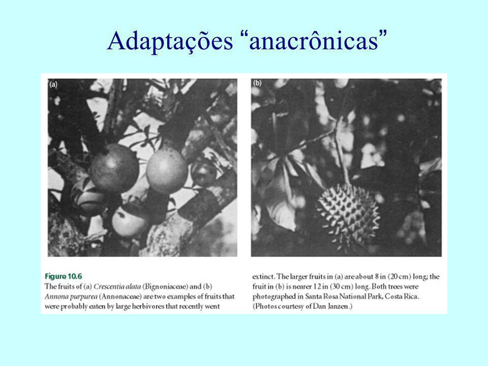 Adaptações anacrônicas