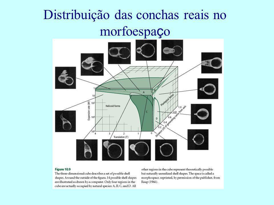 Distribuição das conchas reais no morfoespa ç o