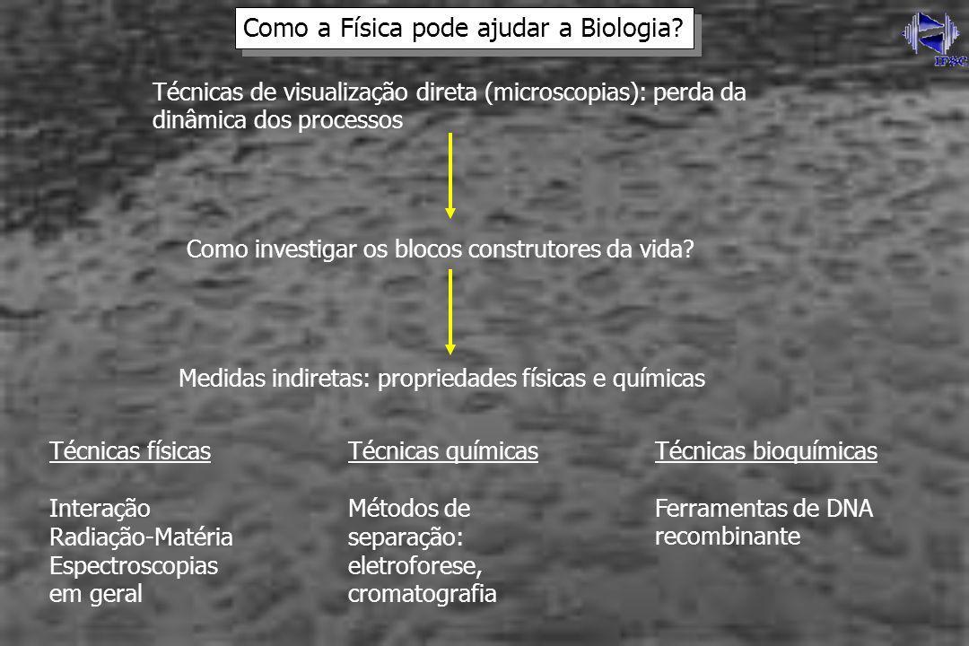 Técnicas de visualização direta (microscopias): perda da dinâmica dos processos Como investigar os blocos construtores da vida? Como a Física pode aju
