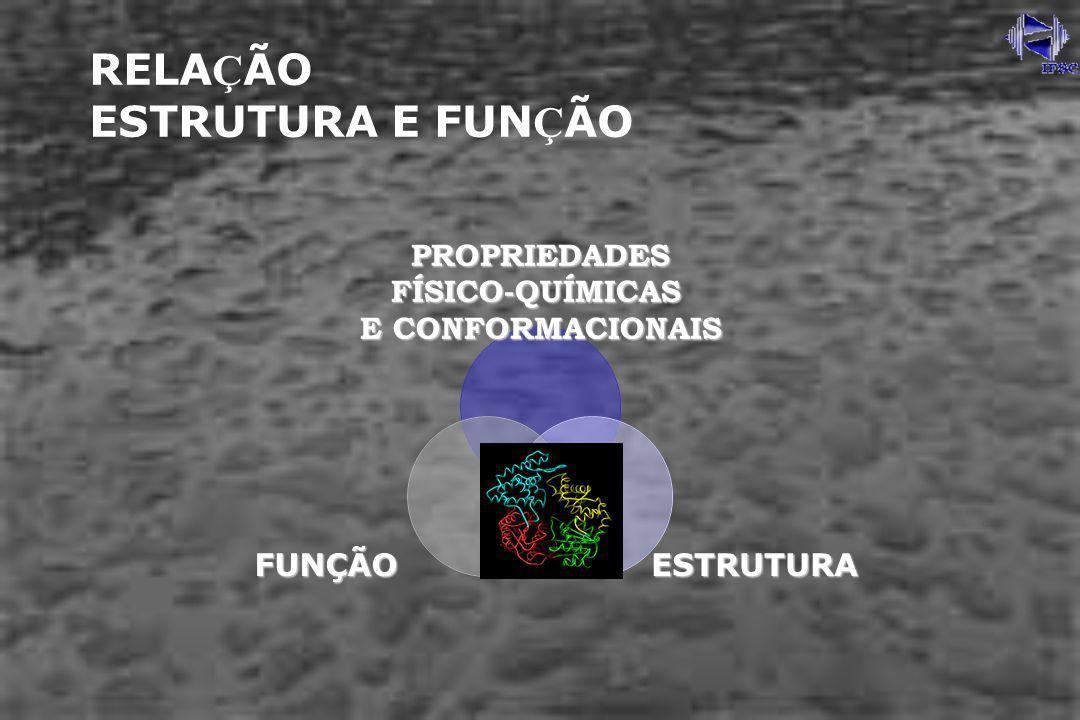 Técnicas Físico-Químicas ELETROFORESE SDS-PAGE FOCALIZAÇÃO ISOELÉTRICA ULTRACENTRIFUGAÇÃO CROMATOGRAFIAS CALORIMETRIA RESSONÂNCIA MAGNÉTICA NUCLEAR RESSONÂNCIA PARAMAGNÉTICA ELETRÔNICA DIFRAÇÃO DE RAIOS-X (CRISTALOGRAFIA) ABSORÇÃO ÓTICA FLUORESCÊNCIA DICROÍSMO CIRICULAR INFRAVERMELHO SAXS MICROSCOPIA ELETRÔNICA ESPECTROMETRIA DE MASSA … + Modelos Teóricos