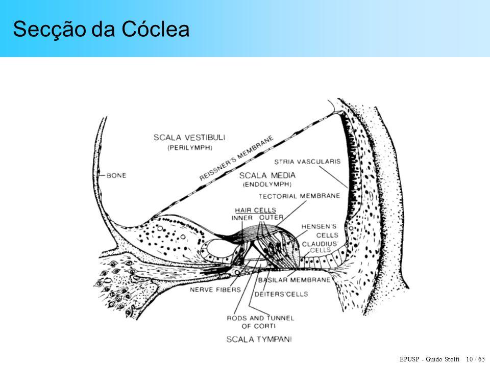 EPUSP - Guido Stolfi 10 / 65 Secção da Cóclea
