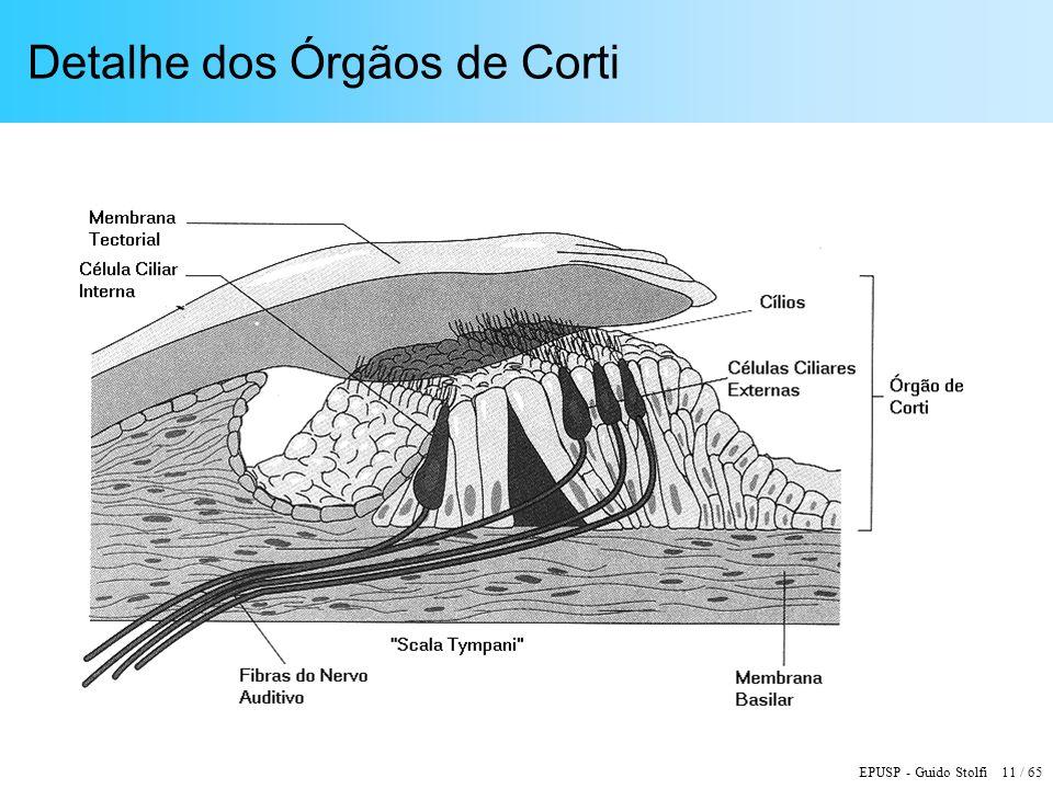 EPUSP - Guido Stolfi 11 / 65 Detalhe dos Órgãos de Corti
