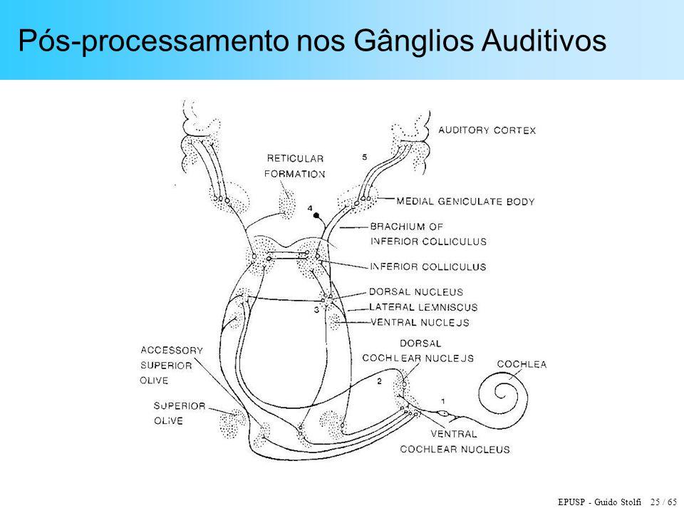EPUSP - Guido Stolfi 25 / 65 Pós-processamento nos Gânglios Auditivos