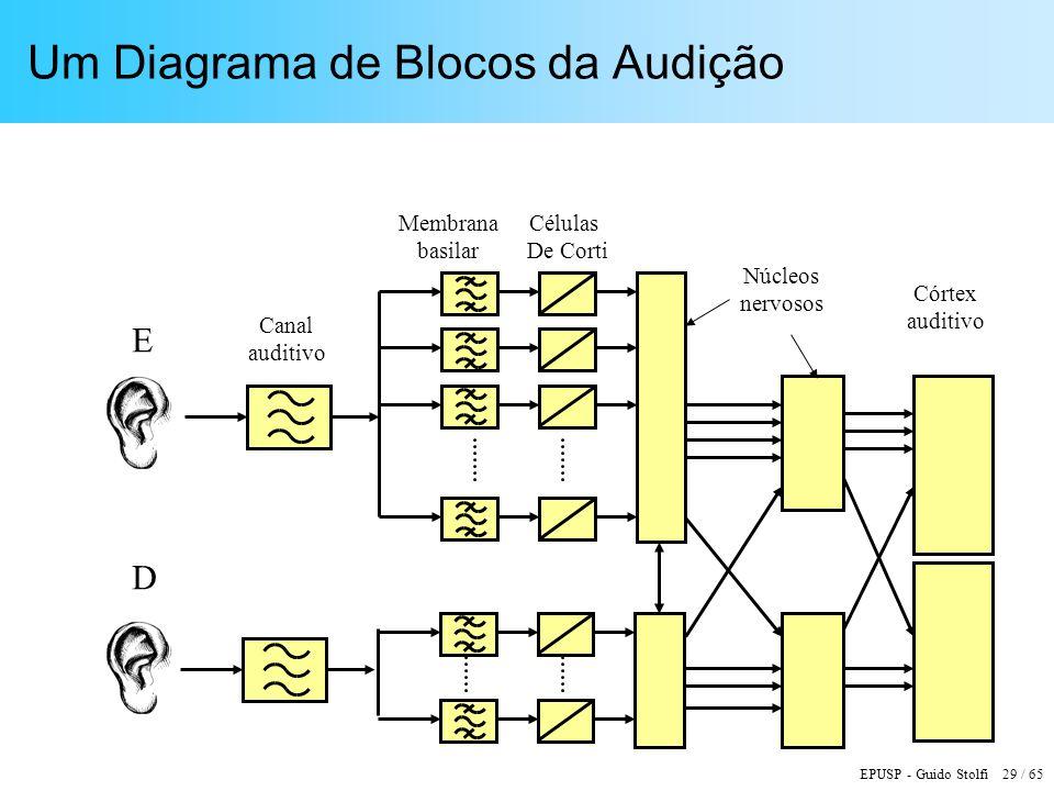EPUSP - Guido Stolfi 29 / 65 Um Diagrama de Blocos da Audição Canal auditivo Córtex auditivo Núcleos nervosos Membrana basilar Células De Corti E D