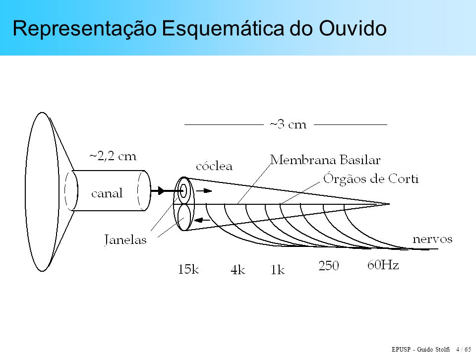 EPUSP - Guido Stolfi 4 / 65 Representação Esquemática do Ouvido