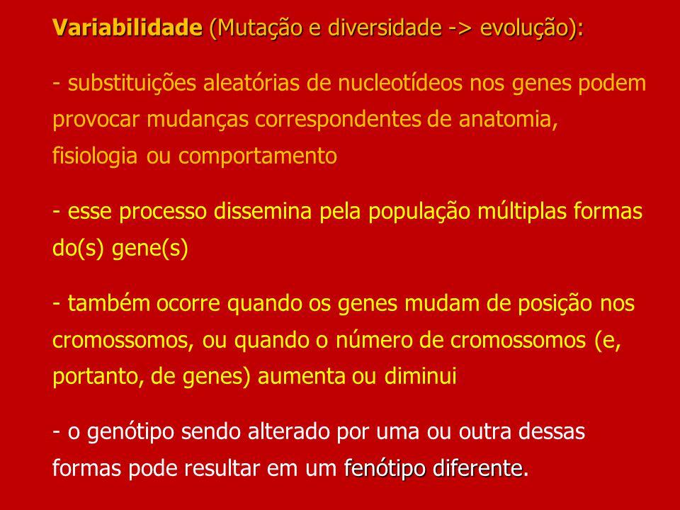 Variabilidade(Mutação e diversidade -> evolução): fenótipo diferente Variabilidade (Mutação e diversidade -> evolução): - substituições aleatórias de