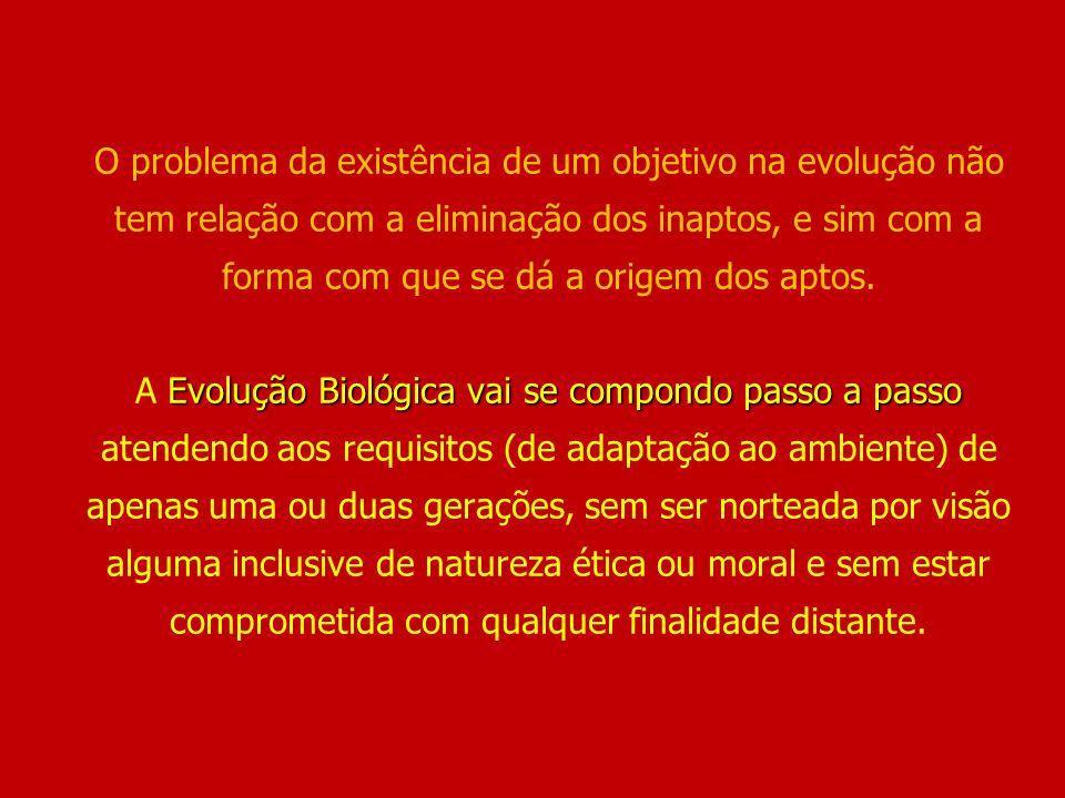Evolução Biológica vai se compondo passo a passo O problema da existência de um objetivo na evolução não tem relação com a eliminação dos inaptos, e s