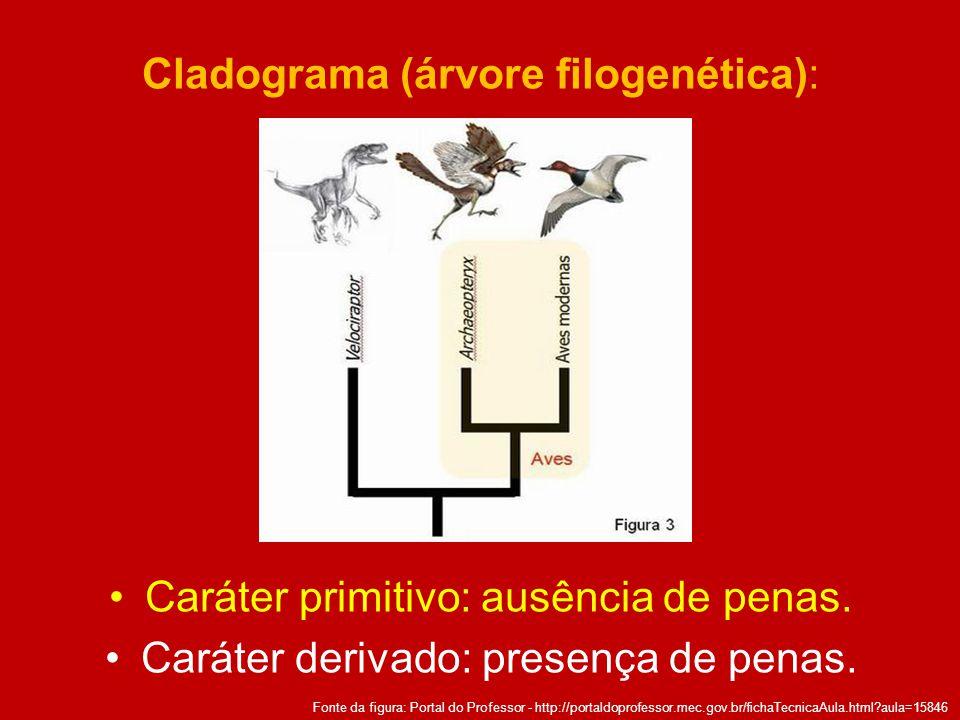 Cladograma (árvore filogenética): Caráter primitivo: ausência de penas. Caráter derivado: presença de penas. Fonte da figura: Portal do Professor - ht