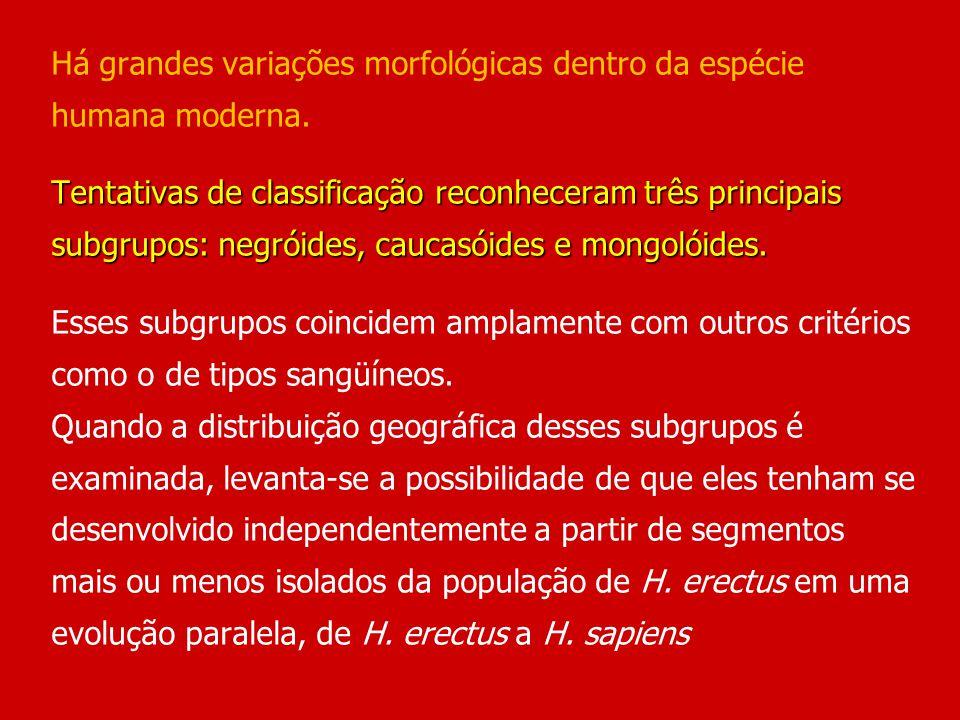 Tentativas de classificação reconheceram três principais subgrupos: negróides, caucasóides e mongolóides. Há grandes variações morfológicas dentro da