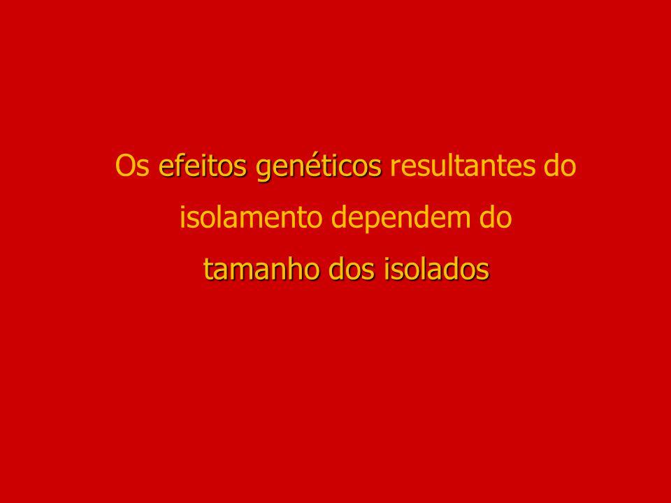 efeitos genéticos tamanho dos isolados Os efeitos genéticos resultantes do isolamento dependem do tamanho dos isolados