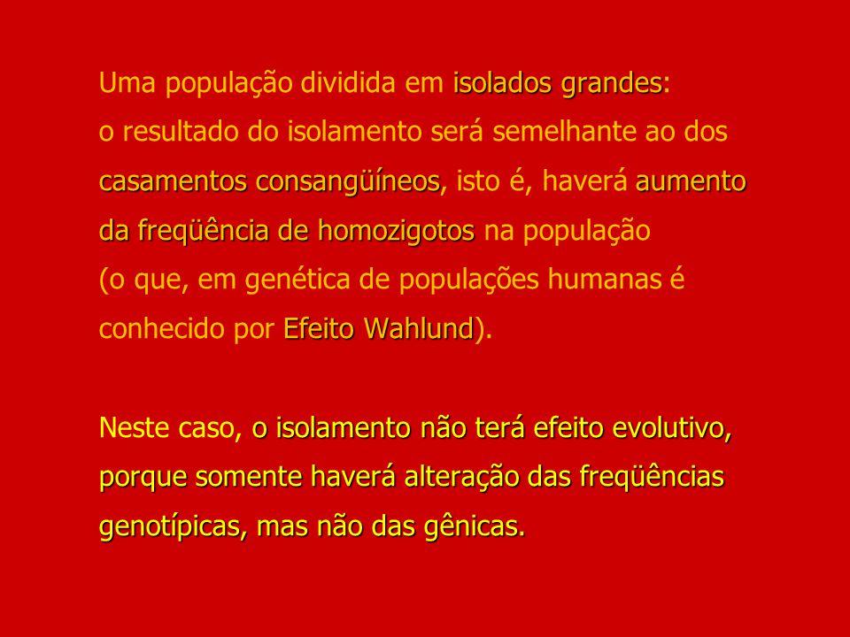 isolados grandes casamentos consangüíneosaumento da freqüência de homozigotos Efeito Wahlund o isolamento não terá efeito evolutivo, porque somente ha