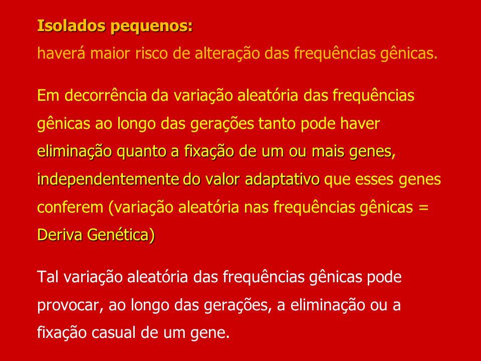 Isolados pequenos: eliminação quanto a fixação de um ou mais genes independentemente do valor adaptativo Deriva Genética) Isolados pequenos: haverá ma