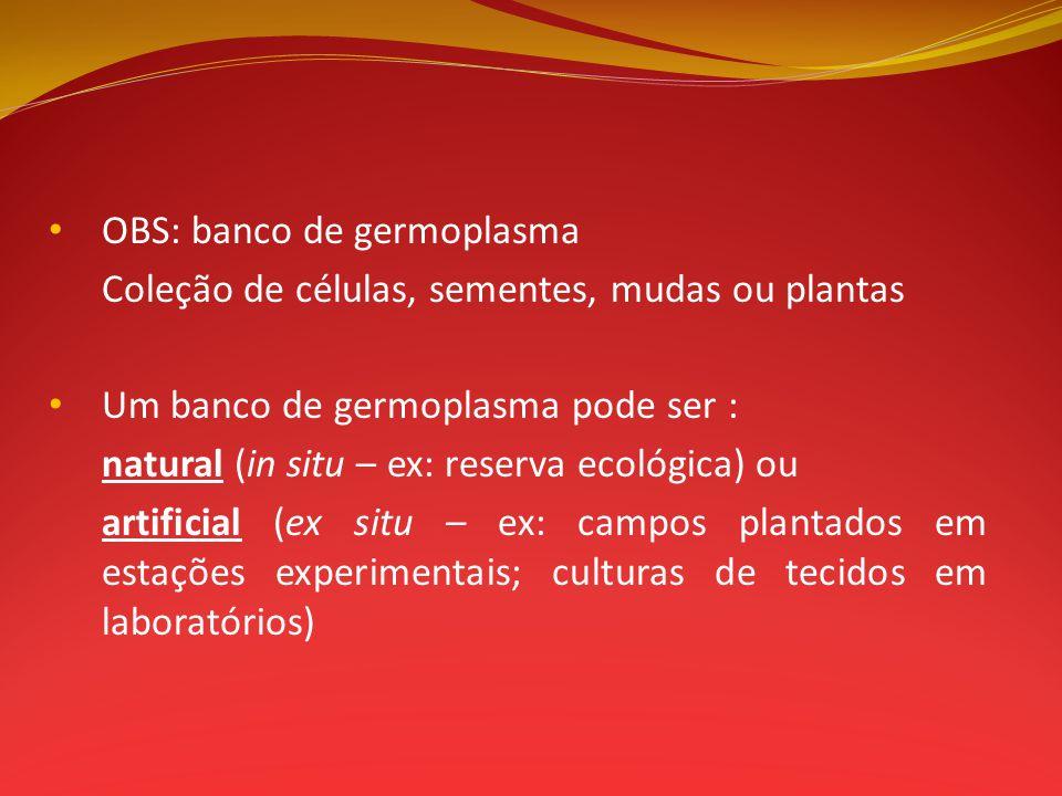 OBS: banco de germoplasma Coleção de células, sementes, mudas ou plantas Um banco de germoplasma pode ser : natural (in situ – ex: reserva ecológica)