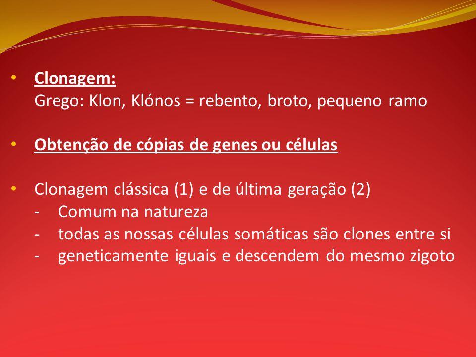 Clonagem: Grego: Klon, Klónos = rebento, broto, pequeno ramo Obtenção de cópias de genes ou células Clonagem clássica (1) e de última geração (2) -Com