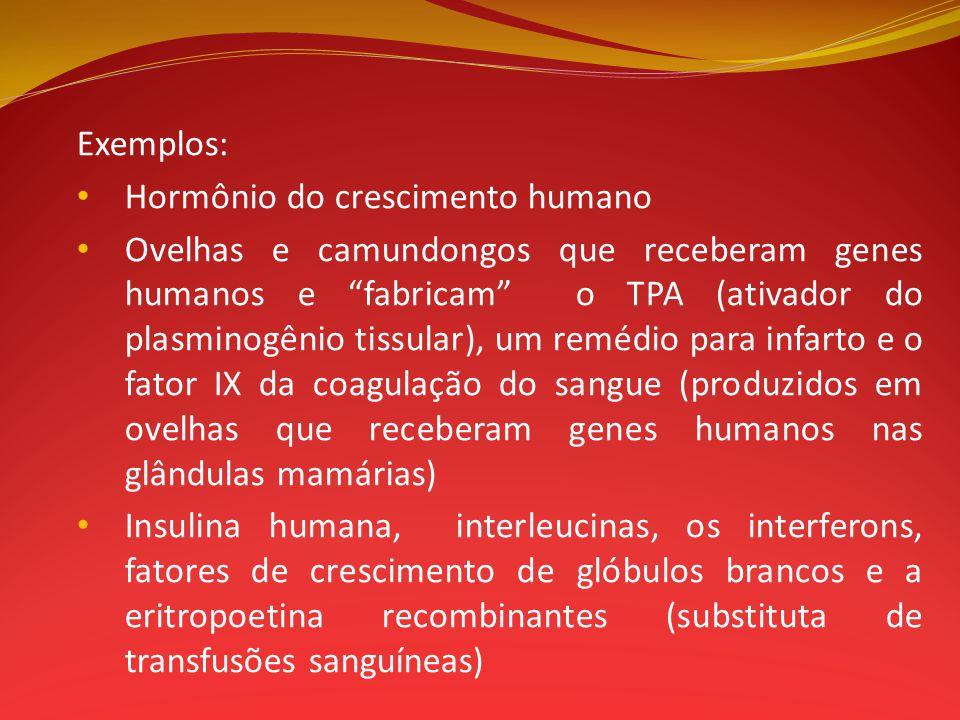 Exemplos: Hormônio do crescimento humano Ovelhas e camundongos que receberam genes humanos e fabricam o TPA (ativador do plasminogênio tissular), um r