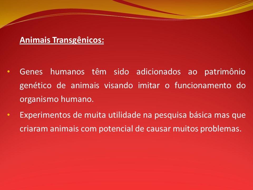 Animais Transgênicos: Genes humanos têm sido adicionados ao patrimônio genético de animais visando imitar o funcionamento do organismo humano. Experim