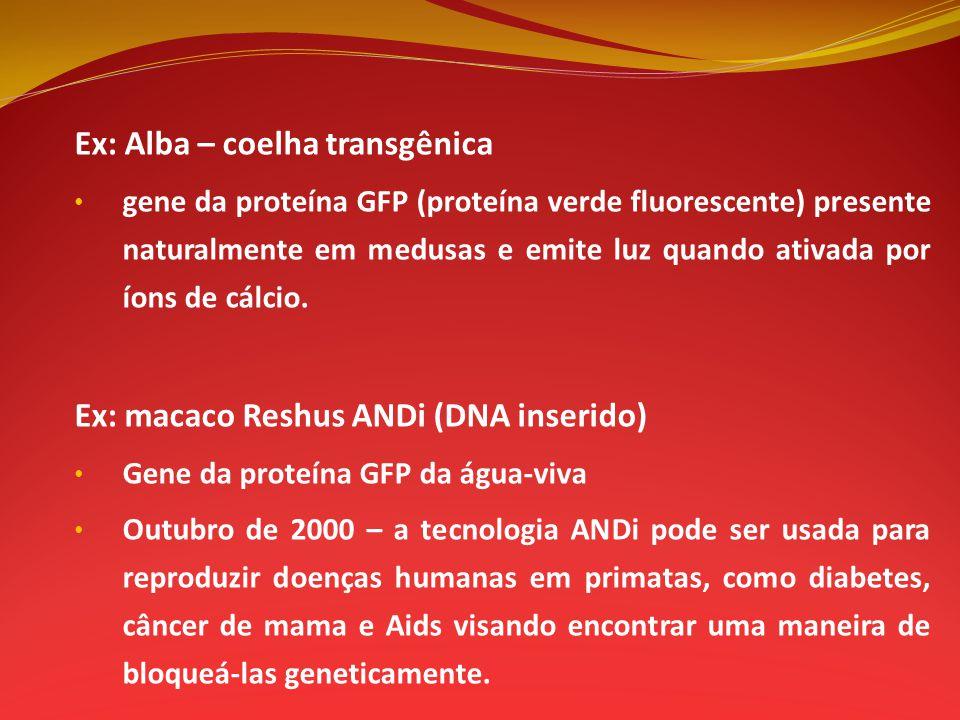 Ex: Alba – coelha transgênica gene da proteína GFP (proteína verde fluorescente) presente naturalmente em medusas e emite luz quando ativada por íons