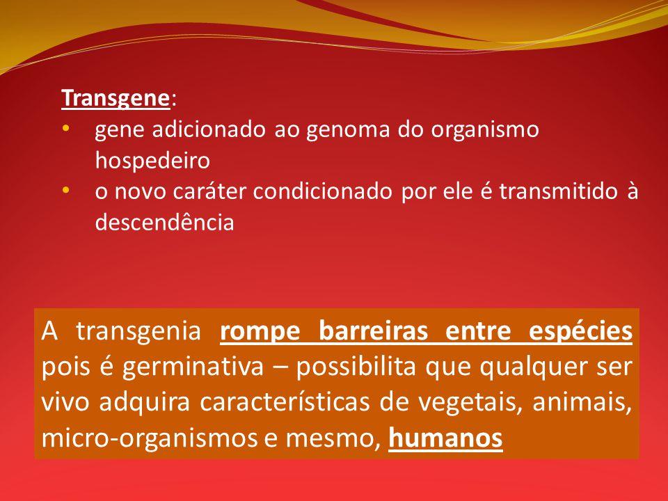 Transgene: gene adicionado ao genoma do organismo hospedeiro o novo caráter condicionado por ele é transmitido à descendência A transgenia rompe barre