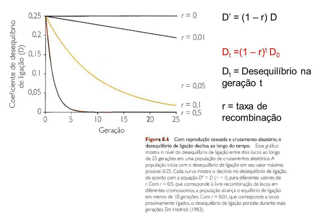 D = (1 – r) D D t =(1 – r) t D 0 D t = Desequilíbrio na geração t r = taxa de recombinação
