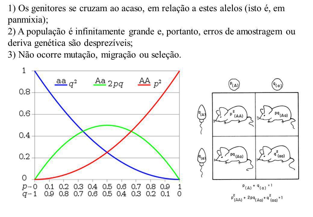 1) Os genitores se cruzam ao acaso, em relação a estes alelos (isto é, em panmixia); 2) A população é infinitamente grande e, portanto, erros de amost