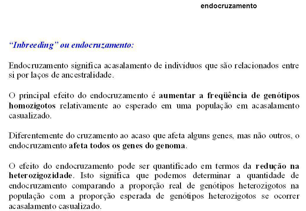 endocruzamento