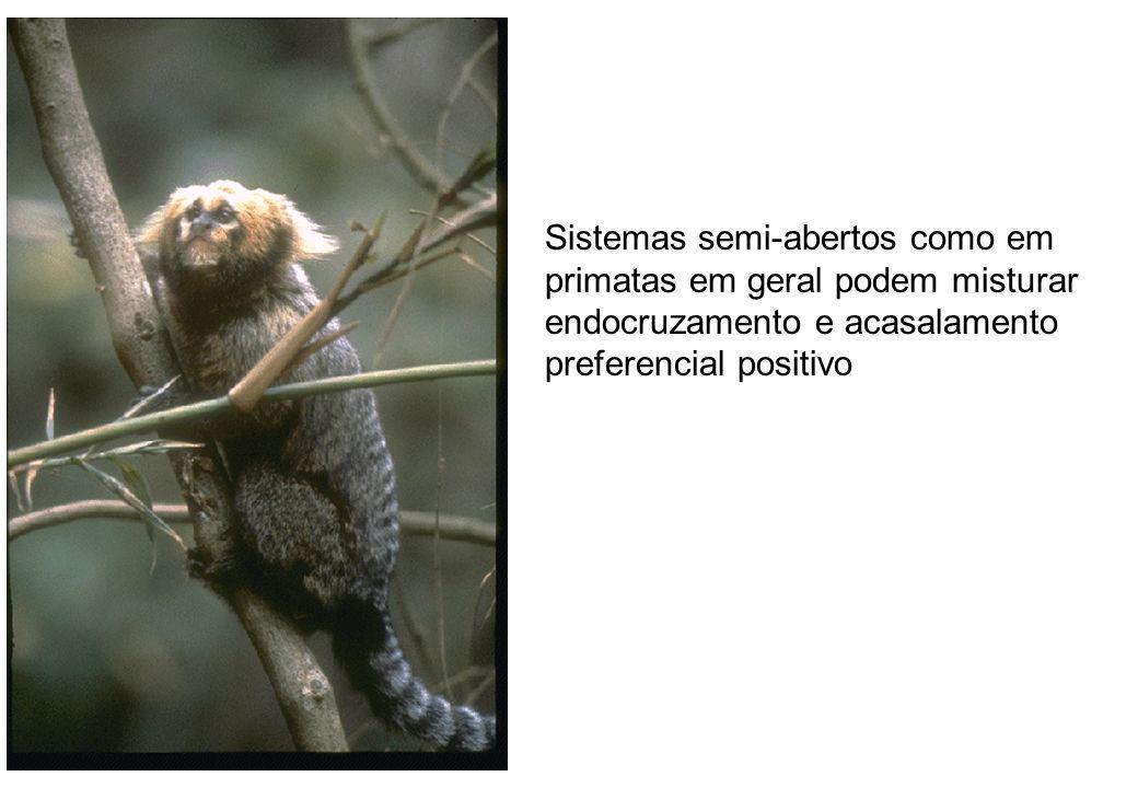 Sistemas semi-abertos como em primatas em geral podem misturar endocruzamento e acasalamento preferencial positivo