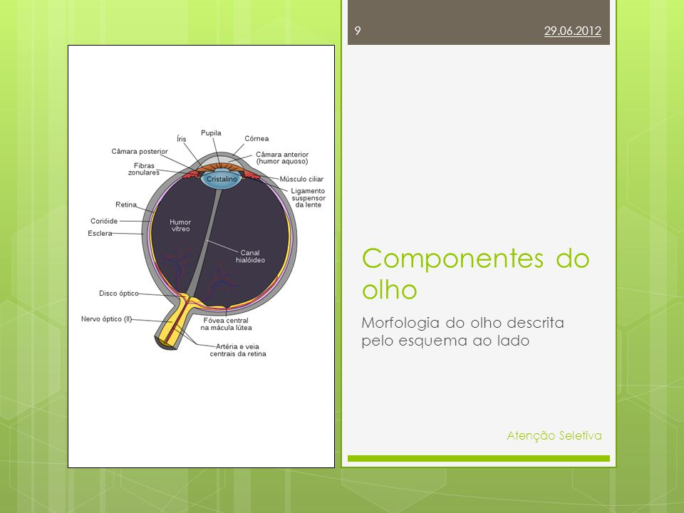 29.06.2012 9 Atenção Seletiva Componentes do olho Morfologia do olho descrita pelo esquema ao lado