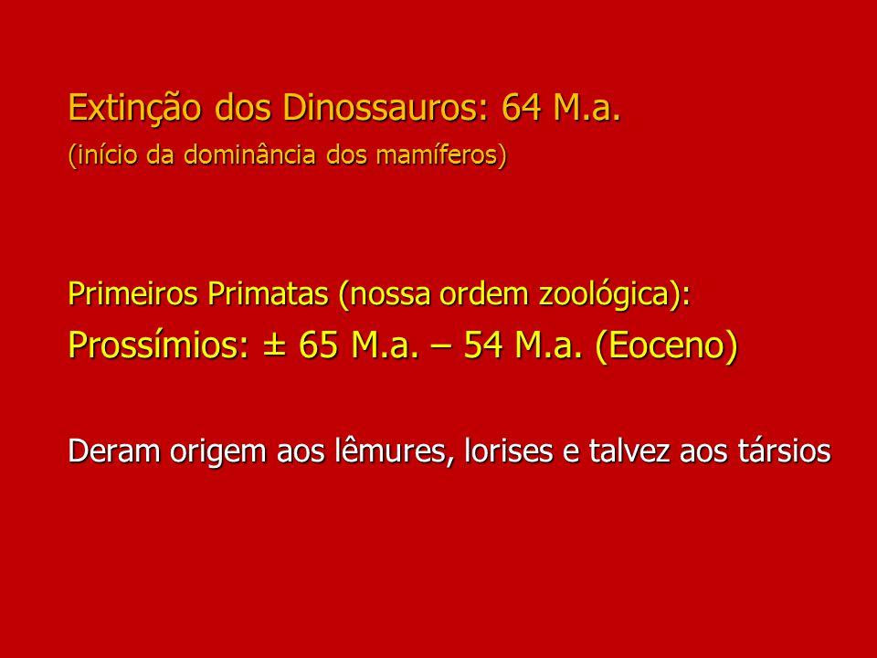 Extinção dos Dinossauros: 64 M.a. (início da dominância dos mamíferos) Primeiros Primatas (nossa ordem zoológica): Prossímios: ± 65 M.a. – 54 M.a. (Eo