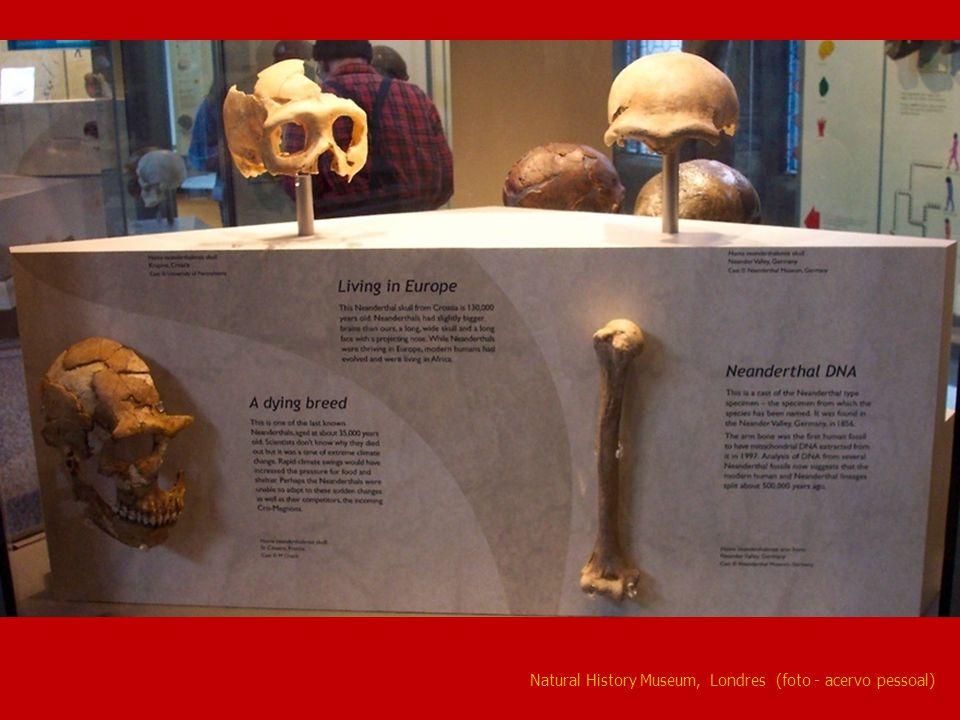 Natural History Museum, Londres (foto - acervo pessoal)