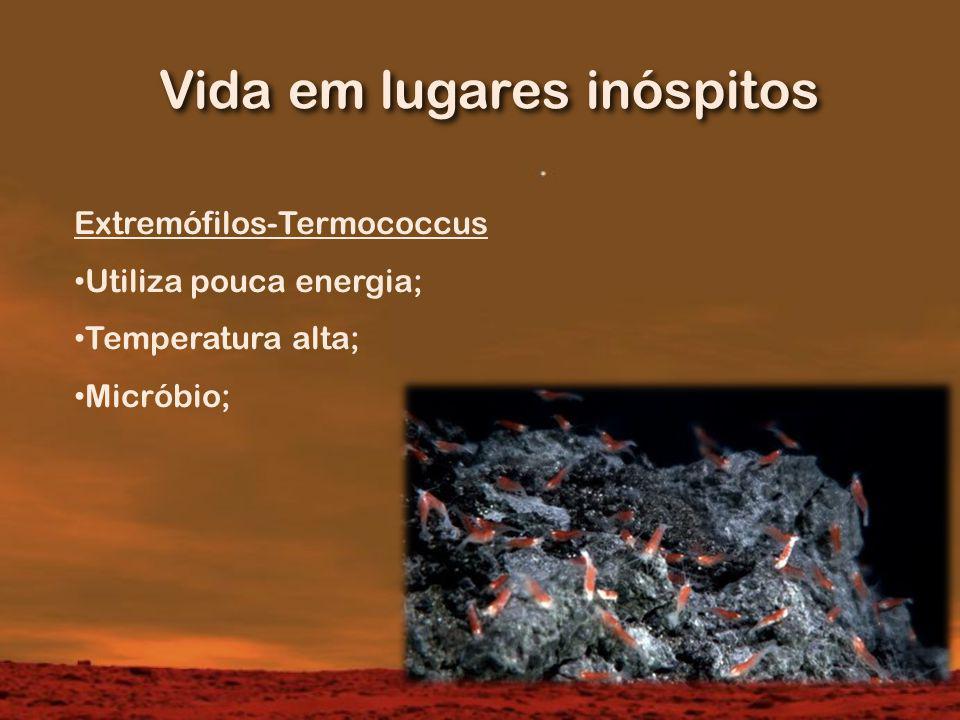 Vida em lugares inóspitos Extremófilos-Termococcus Utiliza pouca energia; Temperatura alta; Micróbio;