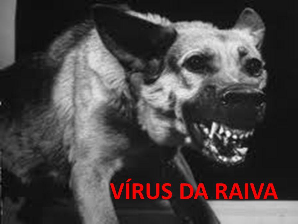 ORIGEM O vírus da raiva é um vírus do gênero Lyssavirus e que é o causador da raiva.