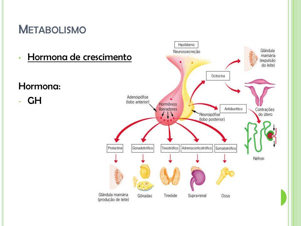 M ETABOLISMO Hormona de crescimento Hormona: - GH