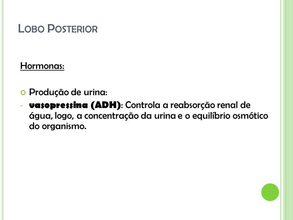 L OBO P OSTERIOR Hormonas: Produção de urina: - vasopressina (ADH) : Controla a reabsorção renal de água, logo, a concentração da urina e o equilíbrio