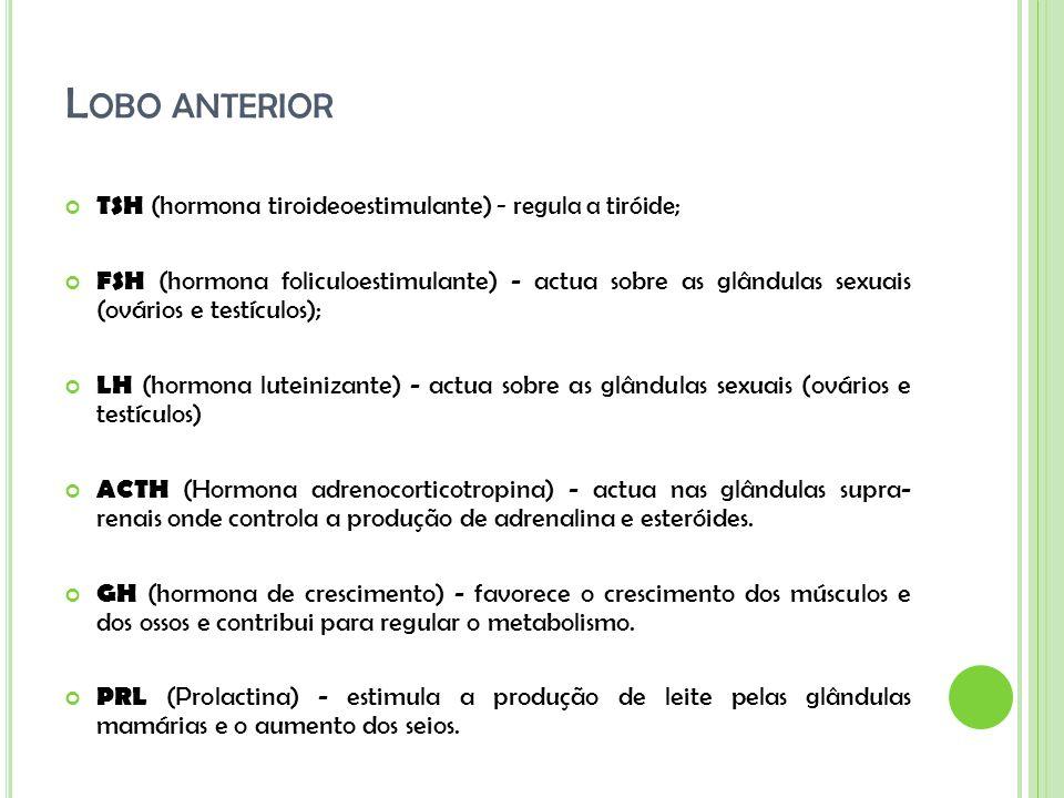 L OBO ANTERIOR TSH (hormona tiroideoestimulante) - regula a tiróide; FSH (hormona foliculoestimulante) - actua sobre as glândulas sexuais (ovários e t