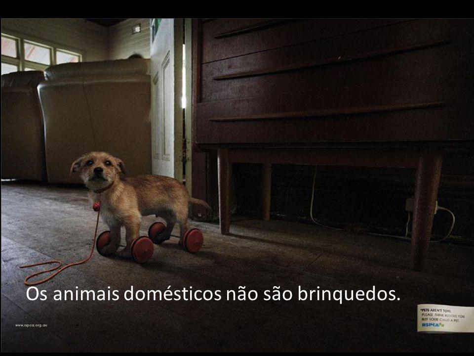 Os animais domésticos não são brinquedos.