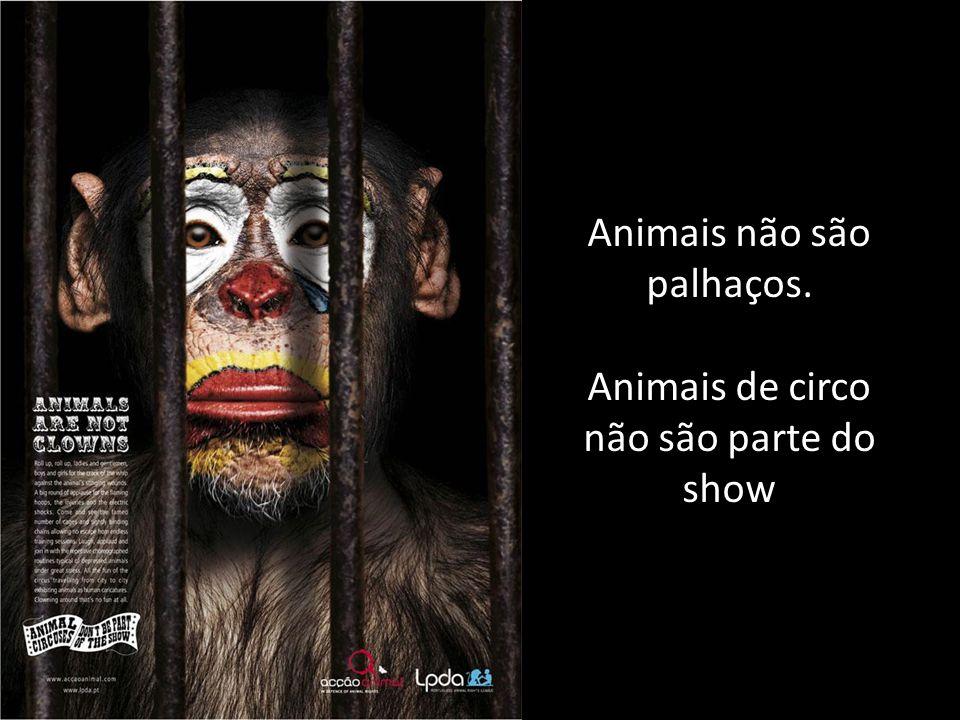 Animais não são palhaços. Animais de circo não são parte do show