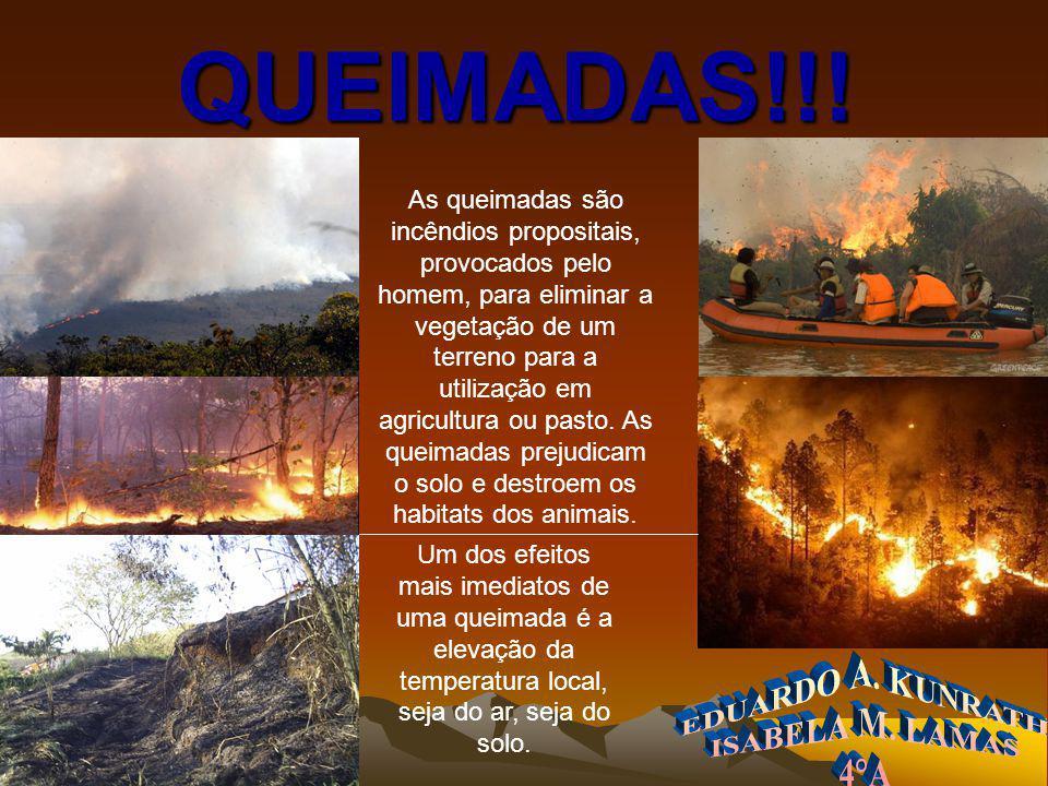 HTTP://WWW.BING.COM O efeito mais notório da queimada é a destruição do ambiente.