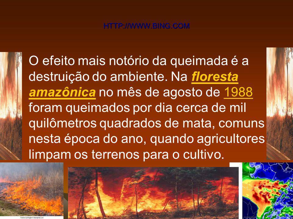 Nuvens de fumaça das queimadas bloqueiam 20% da luz solar, diminuem as chuvas e esfriam a Amazônia