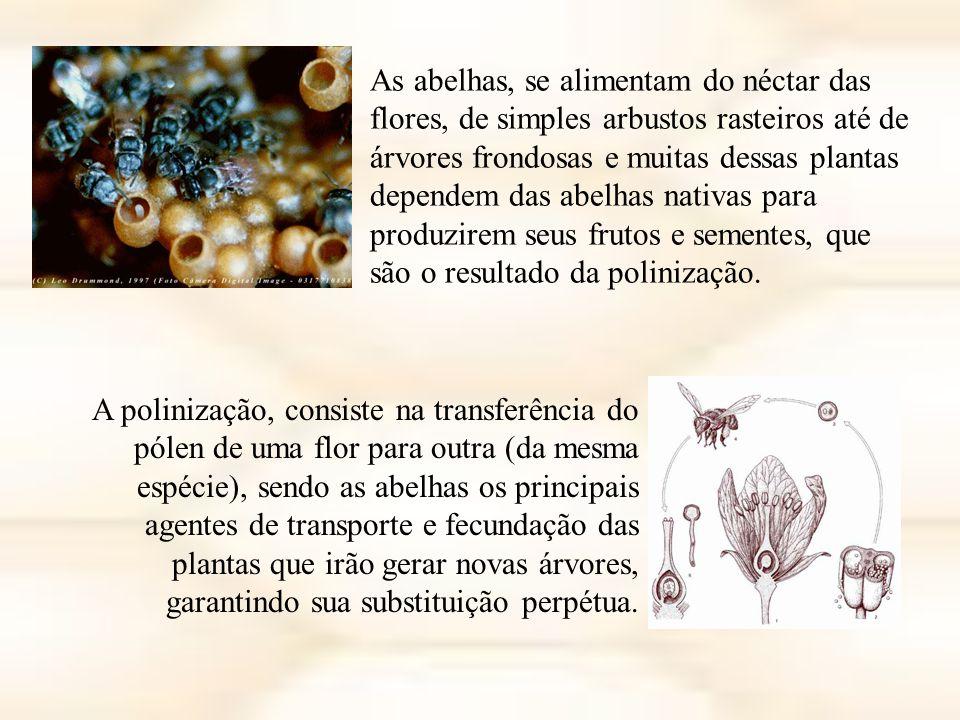As abelhas, se alimentam do néctar das flores, de simples arbustos rasteiros até de árvores frondosas e muitas dessas plantas dependem das abelhas nativas para produzirem seus frutos e sementes, que são o resultado da polinização.