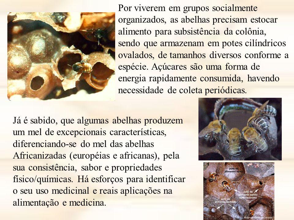 Por viverem em grupos socialmente organizados, as abelhas precisam estocar alimento para subsistência da colônia, sendo que armazenam em potes cilíndricos ovalados, de tamanhos diversos conforme a espécie.
