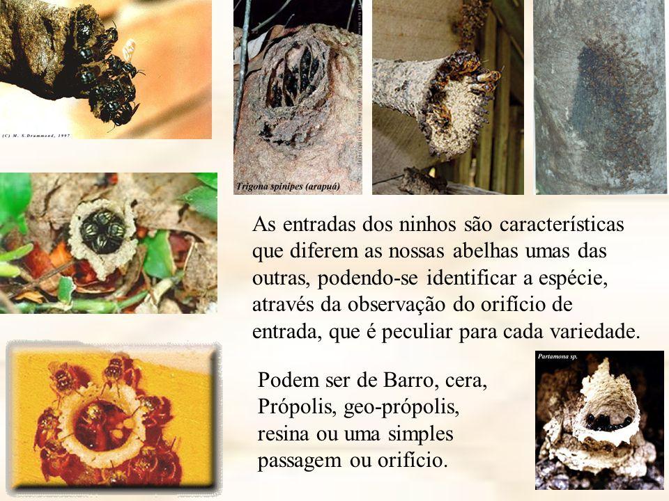 As entradas dos ninhos são características que diferem as nossas abelhas umas das outras, podendo-se identificar a espécie, através da observação do orifício de entrada, que é peculiar para cada variedade.