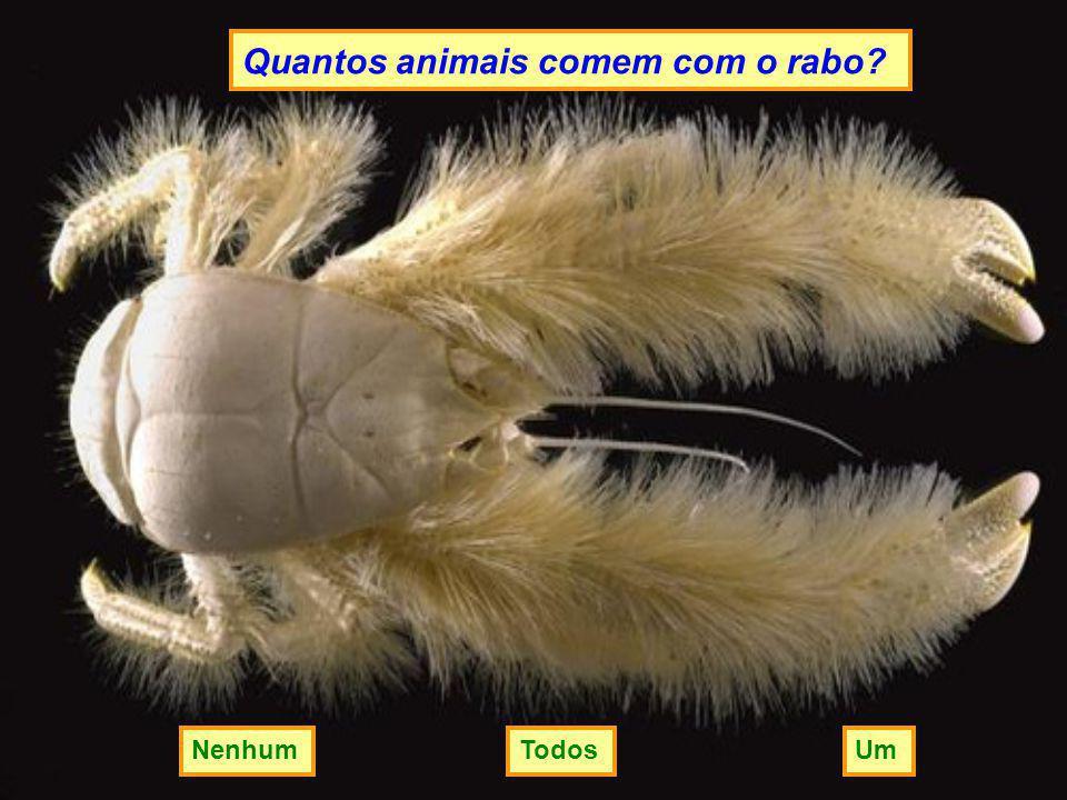 Quantos animais comem com o rabo? UmNenhumTodos