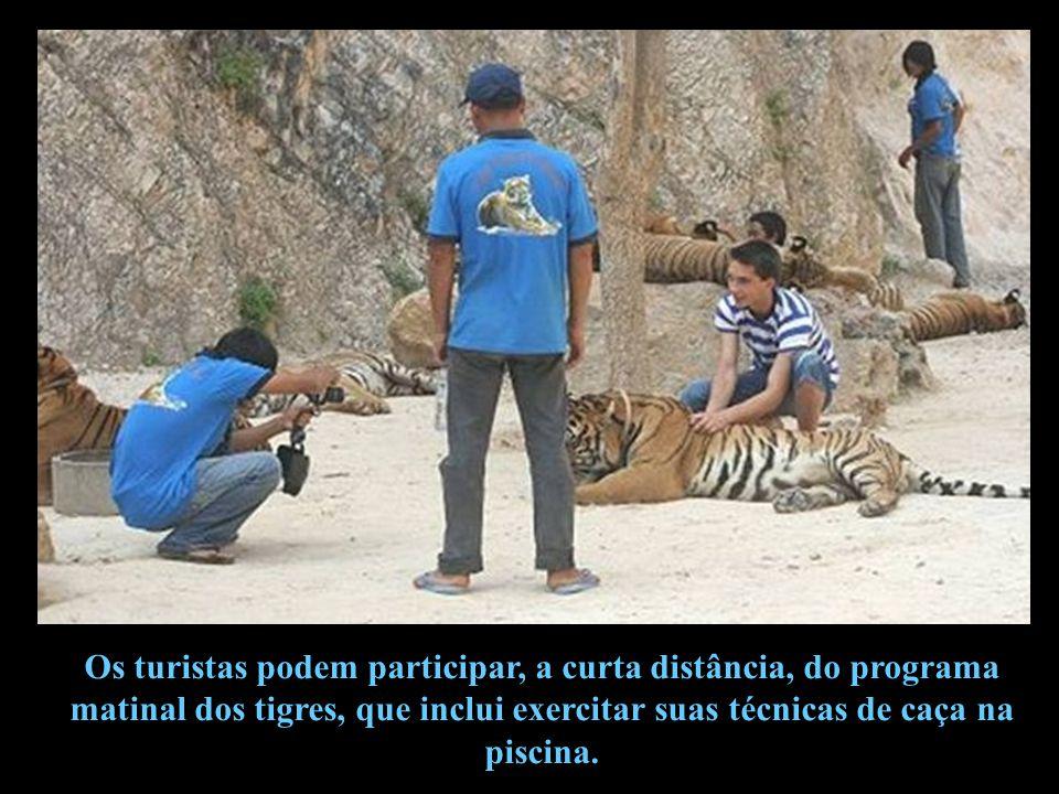 Chan construiu um santuário de vida selvagem, onde turistas podem tocar os tigres que descansam.